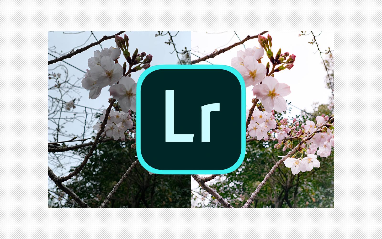 スマホで簡単&本格的な無料写真補正アプリ Lightroom(ライトルーム)で桜の写真を手軽に補正